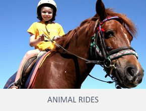 frenzy-events-other-services-animal-rides